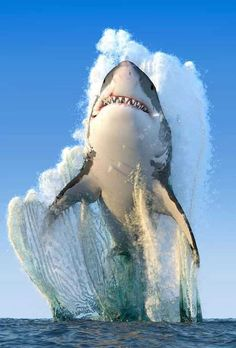 Over 100 shark species: a mammal or a fish? About facts and other interesting questions - Mammals National Geographic Fotos, National Geographic Photography, Biggest White Shark, Great White Shark, Nature Animals, Animals And Pets, Cute Animals, Animals Sea, Beautiful Creatures