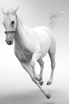 Beautiful white horse.  www.aspenyogamats.com