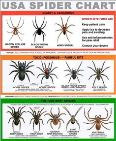 Great reference chart on creepy crawlies... If you get bitten, have your doctor check it out, and if at all possible, kill or capture the offending spider to take as evidence so it's easier to diagnose the bite and potential damage...