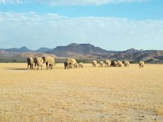 The Elephants of Damaraland Wilderness, Safari, Environment, Wildlife, Elephant, Africa, Camping, Landscape, Water