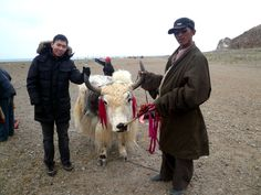 Grabbing the bull by the horns! Click photo to read my blog post on Namco Lake, Tibet.