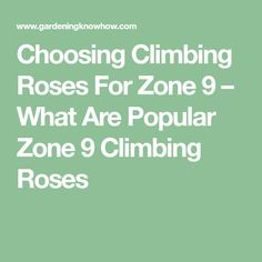 Choosing Climbing Roses For Zone 9 – What Are Popular Zone 9 Climbing Roses