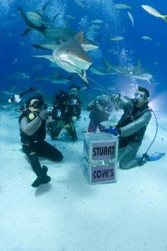 A shark feeding dive in Nassau, Bahamas. I have seen many sharks on my dives but have never done a shark feeding dive. Not sure I would want to either. Have you done one?