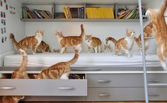 photographer Peta takes several shots of her two ginger kitties and seamlessly merges them with Photoshop into one amazing picture.