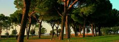 PARCO VIRGILIANO. Un'area di verde in città, amata da molti napoletani e ideale per rilassarsi ed organizzare dei pic nic. Il Parco è molto ampio e ricco di zone verdi, per cui anche chi ama la privacy potrà godere di momenti di pace poichè avrà la possibilità di sistemarsi in zone più tranquille e meno caotiche. Da non perdere è la splendida vista sul mare di Napoli e la bellissima isola di Nisida che si staglia a poca distanza.  Indirizzo: viale Virgilio