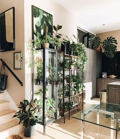 Indoor plants can also bring a lot of vitality to the indoor space, so how to put indoor plants? How to improve the comfort of indoor space through plants? Here are some ways to put indoor plants. Indoor Green Plants, Potted Plants, House Plants Decor, Plant Decor, Ikea Glass Cabinet, Ikea Plants, Indoor Greenhouse, Decoration Plante, Plant Shelves