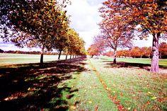 Windsor park leaves