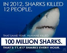 100 million sharks killed each year. Why why people kill sharks I do t know why but they are stupid cuz sharks only kill people when they feel the humans will attack them! So speed the word of STOP KILLING SHARKS!!