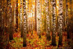Fall in Siberia
