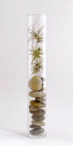 Ways to Display Air Plants Creative Ways to Decorate with Air Plants! Lots of Projects Tutorials!Creative Ways to Decorate with Air Plants! Lots of Projects Tutorials! Air Plant Terrarium, Terrarium Diy, House Plants Decor, Plant Decor, Succulents Garden, Garden Plants, Moss Garden, Air Plants, Indoor Plants