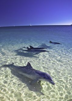 Explore & Discover The Treasures of Shark Bay World Heritage!