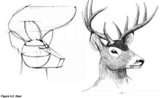 How To Draw Deer Step 23 Sketches Pinterest Deer Drawing