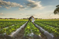 strawberry field wedding photo - concept photography