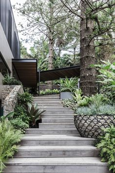 Outdoor stairs constructed from grey ironbark lead up to the pool and barbeque area, flanked by plants in feature pots. Sloped Garden, Garden Pool, Tropical Landscaping, Landscaping Tips, Tropical Gardens, Garden Landscaping, Pond Design, Garden Design, House Design
