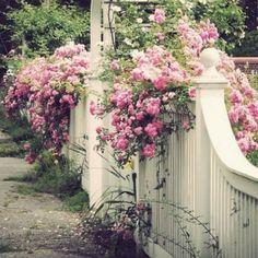 I want a white fence..