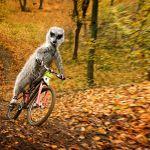 Calendar: Maverick Meerkats 2011