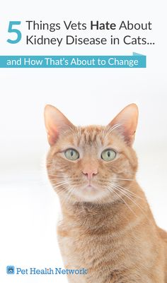#5 Things #Vets Hate About #kidneydisease in #Cats   #pethealthnetwork