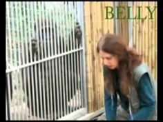 גורילות  - אימון Safari zoo (Israel) scenes- gorilla training