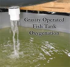 Aquaponics - extra oxygen