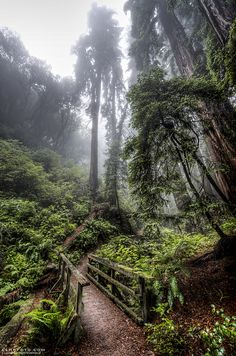 Trail between Stinson Beach and Mt Tamalpais in Marin County, California