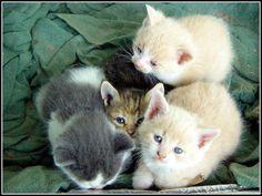10 grands fonds d'écran pour de petits chatons - fonds d'écran gratuits by unesourisetmoi