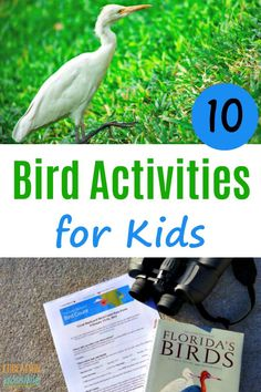 Fun bird activities for kids you can do when studying flying creatures as part of your science lesson plans. Plus, some ideas for using birds as inspiration for your art lessons. As homeschoolers, you can have fun birding in your own back yard. Science Lesson Plans, Science Activities For Kids, Science Lessons, Summer Activities, Art Lessons, Geography Lessons, Stem Activities, Educational Activities, Birds For Kids