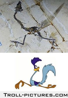 They say its the fossil of one of the earliest birds that lived, but I think we all know who it is.