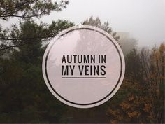 A Little Montage of Autumn – blog in progress