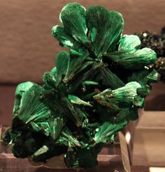 Malachite:  from the 2011 Tucson Gem & Mineral Show of the piece pinned from tgms.org (photo by Renate Surh)