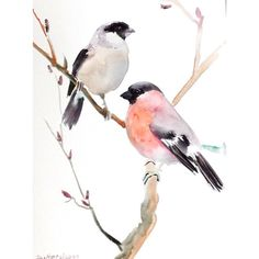 Bullfinch, original watercolor painting, 12 X 9, male and female... (230 HRK) ❤ liked on Polyvore featuring home, home decor, wall art, fillers, illustrations, animals, art, effects, bird home decor and animal paintings