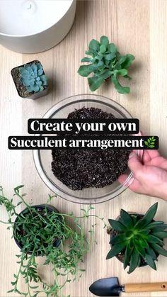 Inside Plants, Small Plants, Potted Plants, Garden Plants, Indoor Plants, Growing Succulents, Planting Succulents, Planting Flowers, House Plants Decor