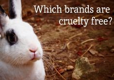 Which beauty brands are cruelty free? Click for a list!