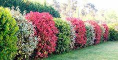 Avoir une haie fleurie toute l'année - une mission possible! Garden Shrubs, Garden Plants, Formal Gardens, Outdoor Gardens, Landscape Design, Garden Design, Tree Pruning, Little Gardens, Garden Spaces