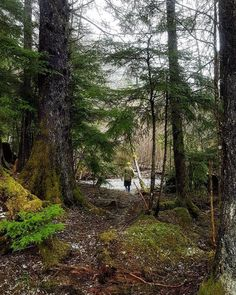 Life is better when you're in a forest. #Repost @runsitka