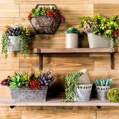 DIY an accent wall with containers and faux succulents!