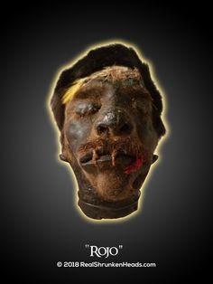 "Real Shrunken Head Photo.  ""Rojo"" www.RealShrunkenHeads.com Tsantsa: Oddities & Curiosities"
