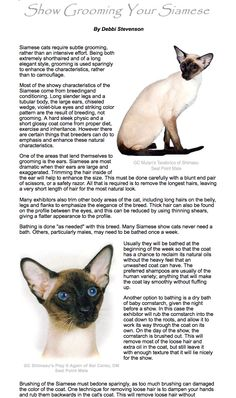 Show Grooming your siamese ~❈~  Debbi Stevenson http://www.nationalsiamese.com/groom.htm