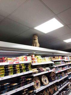 Dieser Gentleman, der ganz klar der King im Supermarkt ist.
