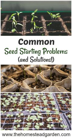 Starting Problems and Solutions Common Seed Starting Problems and Solutions: learn how to start seeds inside and fix seed starting mistakes.Common Seed Starting Problems and Solutions: learn how to start seeds inside and fix seed starting mistakes. Organic Gardening Tips, Vegetable Gardening, Gardening Hacks, Veggie Gardens, Garden Pests, Potager Garden, Problem And Solution, Growing Herbs, Growing Veggies