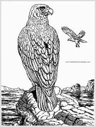 https://www.google.com/search?q=adult coloring free