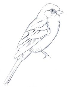 Flying Bird Drawing, Bird Pencil Drawing, Bird Drawings, Drawing Birds, Bird Pictures, Pictures To Draw, Animal Sketches, Art Sketches, Draw Tutorial