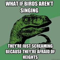 Screaming birds