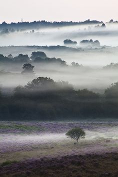 The New Forest, Hampshire by Simon J. Byrne
