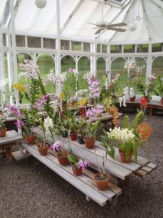 Lanai, Hawaii the Orchid greenhouse brought over from England. The Lodge at Koele.