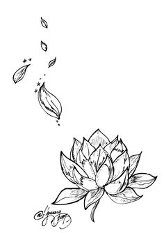 Lotus on lower ab with stray petals up hip and side?