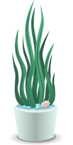 Stueplanter, Grøn, Grønne, Blade, Hvid, Gryder