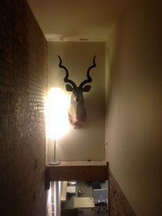Kudu @ Levine DC