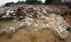 Scientists find sustainable solutions for oysters in the future by looking into the past #Geology #GeologyPage