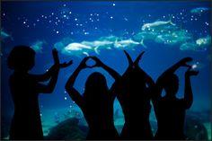 @Erica Maland, this made me think of you! Aquarium wedding