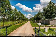 Oranienburg (Mai 2014) - Schlosspark Oranienburg  #Oranienburg #SchlossOranienburg #Brandenburg #Deutschland #Germany #biancabuergerphotography #igersgermany #IG_Deutschland #ig_germany #shootcamp #shootcamp_ig #pickmotion #diewocheaufinstagram #visitbrandenburg #visit_brandenburg #AOV5k #Schlosspark #park #garden #canon #canondeutschland #EOS70D #Bäume #trees